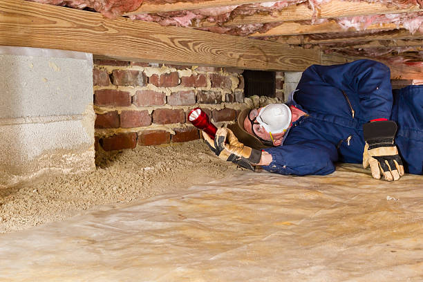 crawl space professional